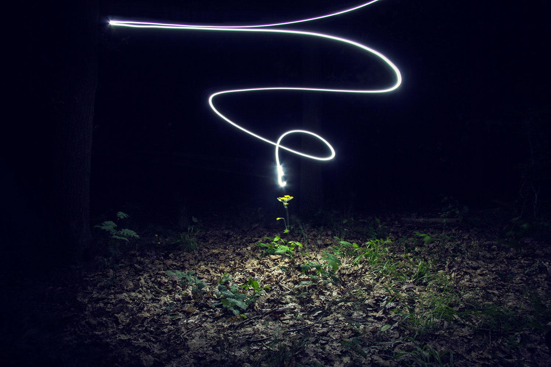 bildgabe-nachtfotografie-blume