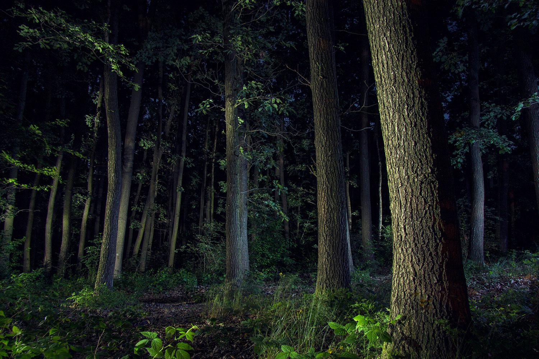 bildgabe-nachtfotografie-waldrand
