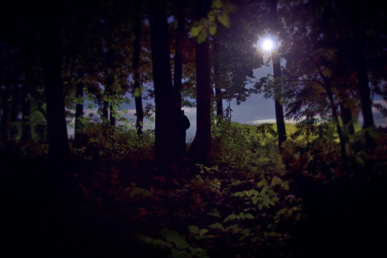 bildgabe-nachtfotografie-waldrand2