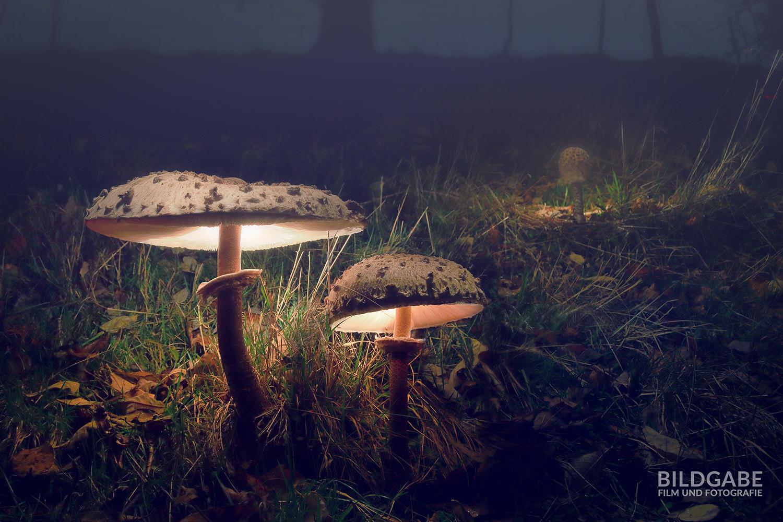 pilzpaar im nebel